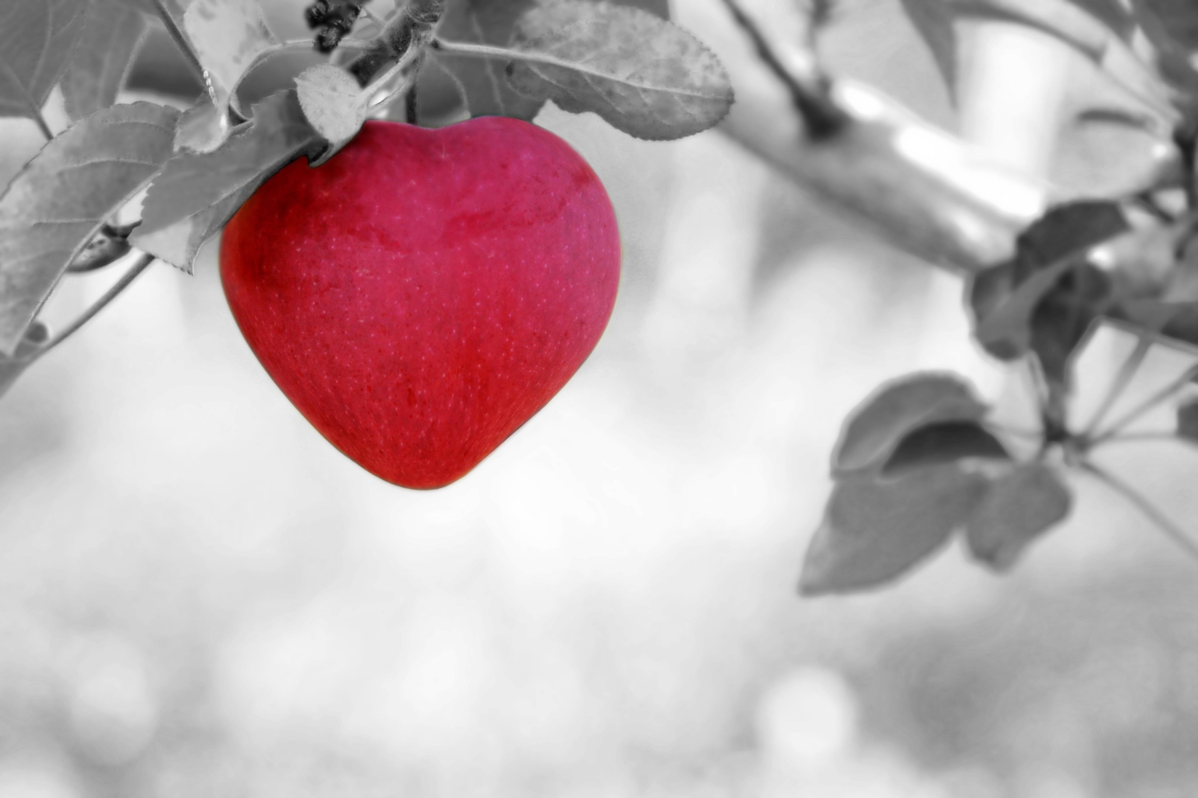 apple-570965
